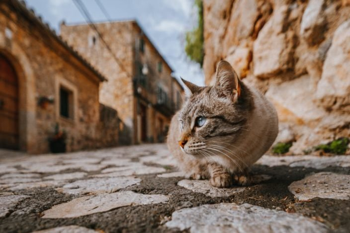 Cat on a pavement, looking away.