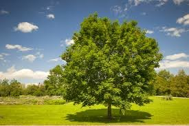 1625962464_752_Save-Trees-Essay-for-All-Students-8211-Read-Here