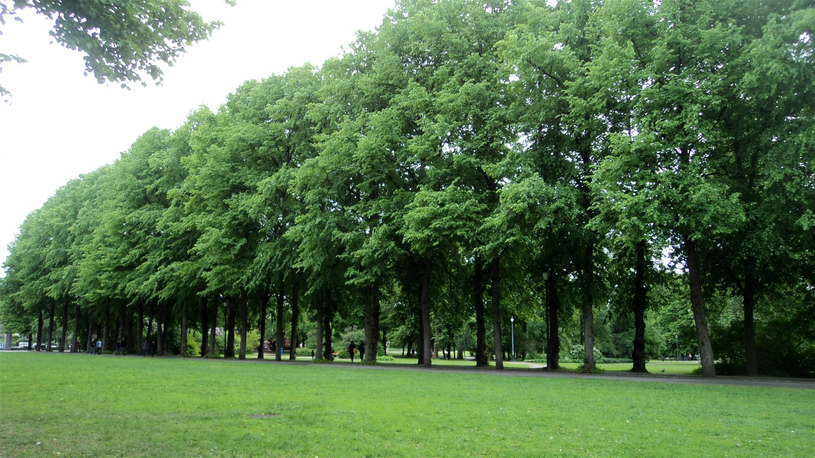 1625964186_671_Essay-On-Uses-of-Trees-For-Students-And-Children-In