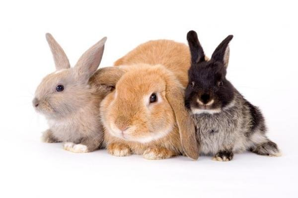 1625965264_418_Essay-On-Rabbit-For-Students-In-Easy-Words-8211-Read