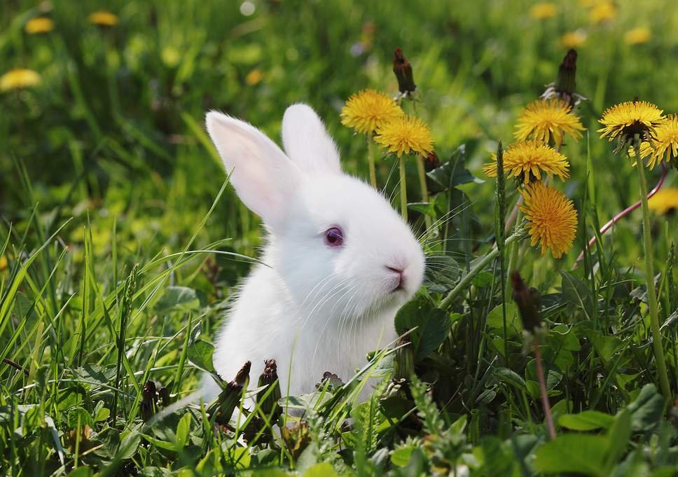 1625965265_40_Essay-On-Rabbit-For-Students-In-Easy-Words-8211-Read