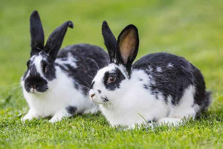 1625965266_22_Essay-On-Rabbit-For-Students-In-Easy-Words-8211-Read