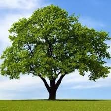 1625967223_336_Essay-On-Importance-Of-Tree-Plantation-For-Students-In-Easy