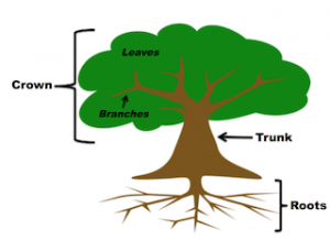 Essay-On-Importance-Of-Tree-Plantation-For-Students-In-Easy