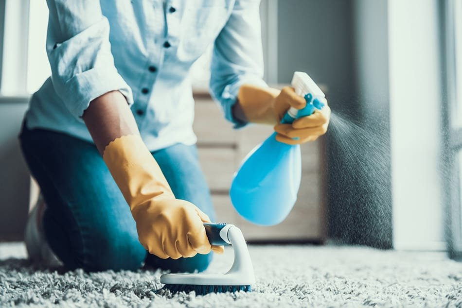 1628179058_302_How-to-Get-Ants-Out-of-Carpet-4-Suggested-Treatment