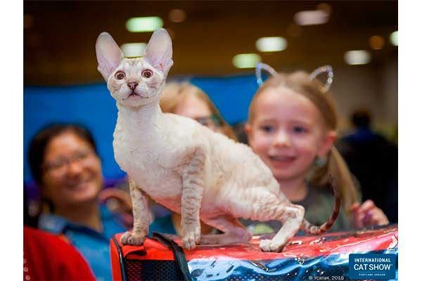 1631363607_662_Whats-Mew-at-Catster-September-2021-Cat-Events