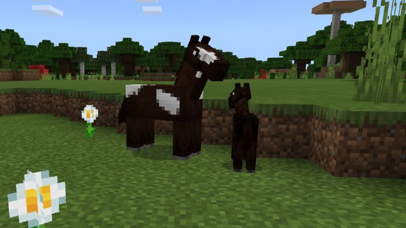 1631695646_481_How-To-Breed-Horses-In-Minecraft-and-Tame-Them