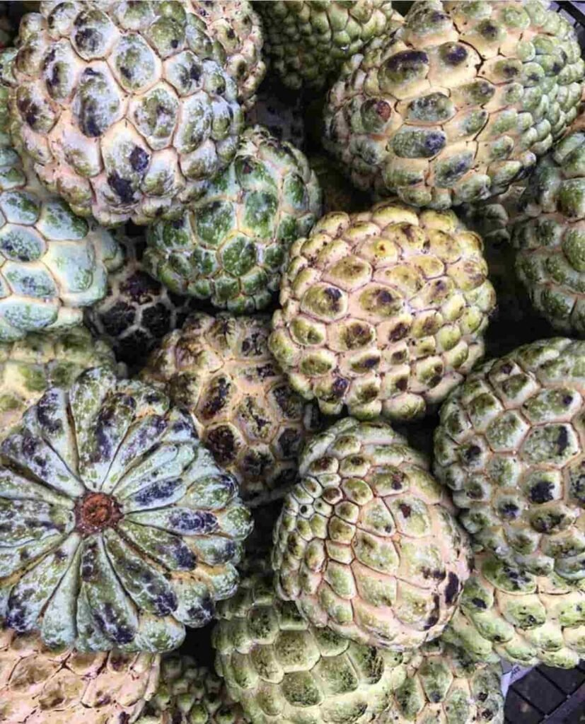 1632461878_989_5-Things-You-Didn039t-Know-About-Sweetsop-Jamaican-Foods