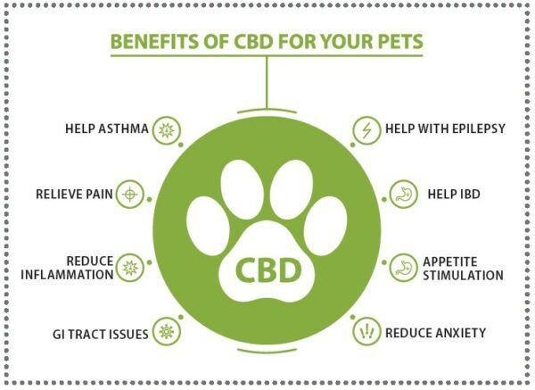 2021-Cat-Lovers-Guide-to-CBD