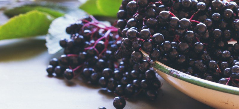 Elderberry-Benefits-Dosage-Side-Effects-and-Interactions