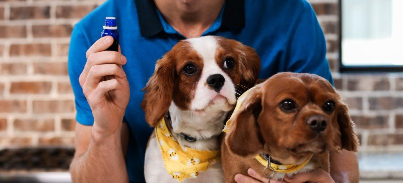 Essential-Oils-for-Pets-The-Best-amp-Worst-Oils-to