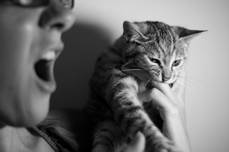tabby cat biting a person's hand