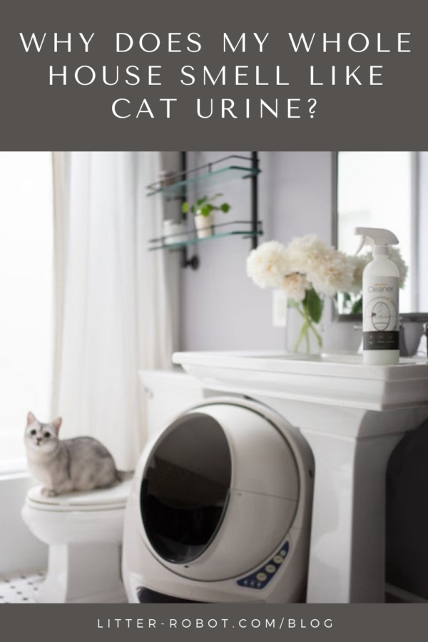 White cat sitting on toilet next to self-cleaning Litter-Robot with Litter-Robot cleaner spray above - why does my whole house smell like cat urine?