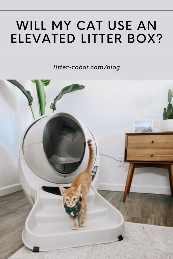 Orange tabby cat with handkerchief on ramp in from of Litter-Robot 3 Connect - will my cat use an elevated litter box?