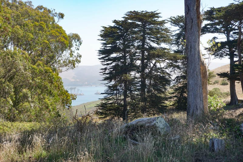 1633304290_941_Tomales-Point-Trail-A-Must-Do-Hike-at-Point-Reyes-National