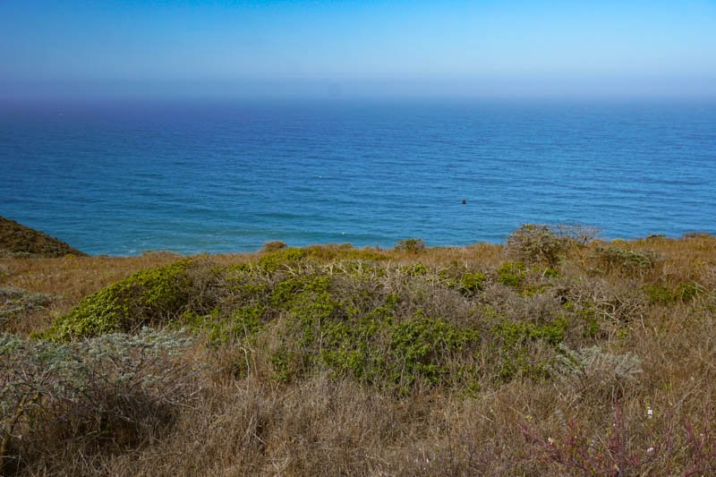 1633304296_286_Tomales-Point-Trail-A-Must-Do-Hike-at-Point-Reyes-National