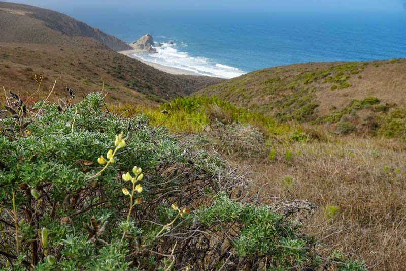 1633304297_219_Tomales-Point-Trail-A-Must-Do-Hike-at-Point-Reyes-National