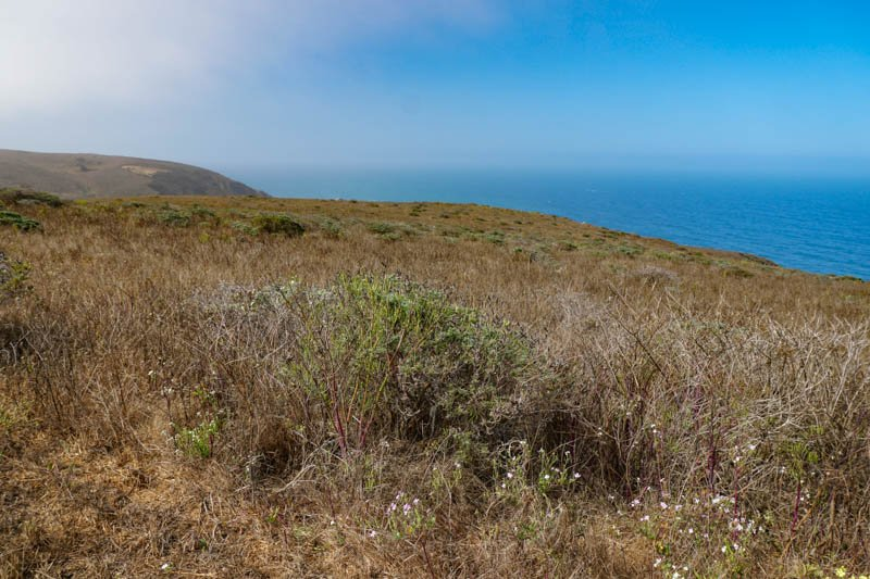 1633304298_570_Tomales-Point-Trail-A-Must-Do-Hike-at-Point-Reyes-National