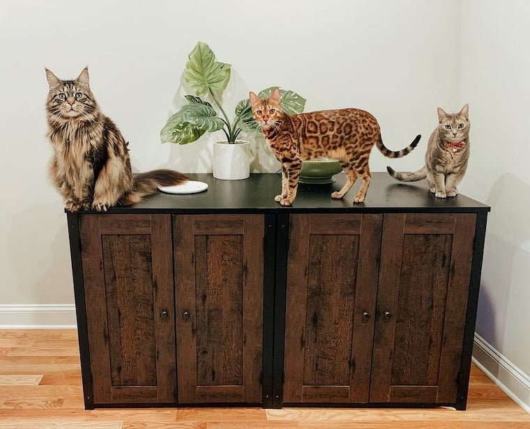 Maine Coon cat, Bengal cat, and tan tabby cat sitting on top of Litter-Robot storage cabinet concealed litter box