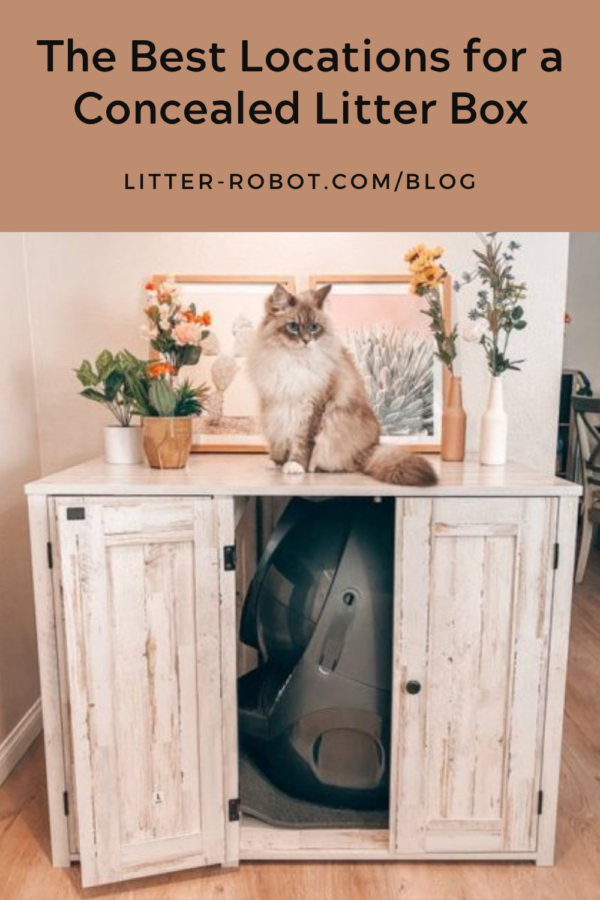 Long-haired Ragdoll cat sitting on top of Litter-Robot credenza - best locations for a concealed litter box