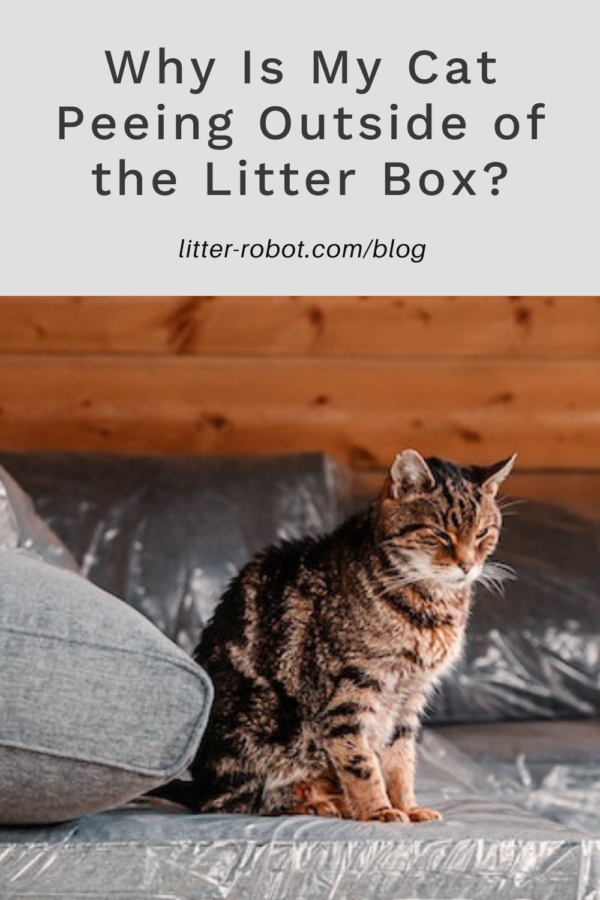 brown tabby cat sitting on couch covered in plastic - why is my cat peeing outside of the litter box?